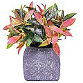 Colorful Artificial Leafs in a Attractive Vase