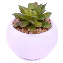 Artificial Succulent Plant in Vase (Ghost Plant)