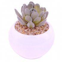 Artificial Succulent Plant in Vase (Graptoveria Opalina)