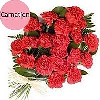 All of Me - 20 Fresh Red Carnations Bunch