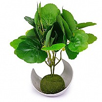 Green Leaf Plant in a Beautiful Vase