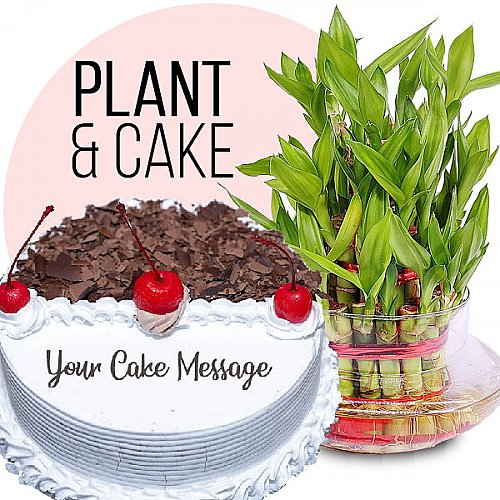 Black Forest Cake 1kg & Lucky Bamboo Plant
