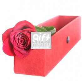You're The One - Single Rose in Elegant Red Box