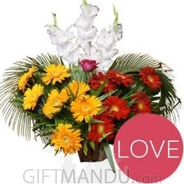 Gorgeous Red Yellow Gerbera and White Gladious Basket