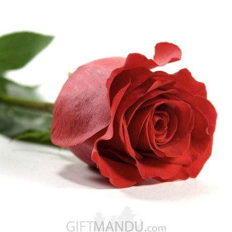 Size Your Love (Customized Number of Roses Bouquet)