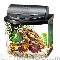 Mini Aquarium Gift Set