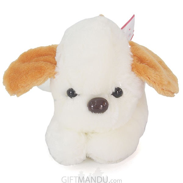 Cute and Lovely White Puppy