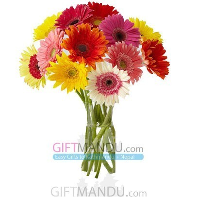 You are the Colors of My Life - 12 Colorful Gerbera - HID