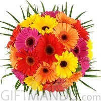 20 Mixed Gerbera Bouquet