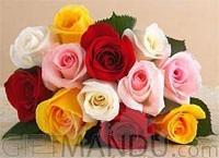 One Dozen Multi-Color Roses Bunch for Biratnagar